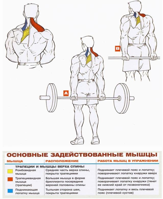 Прокачать мышцы спины в домашних условиях 416