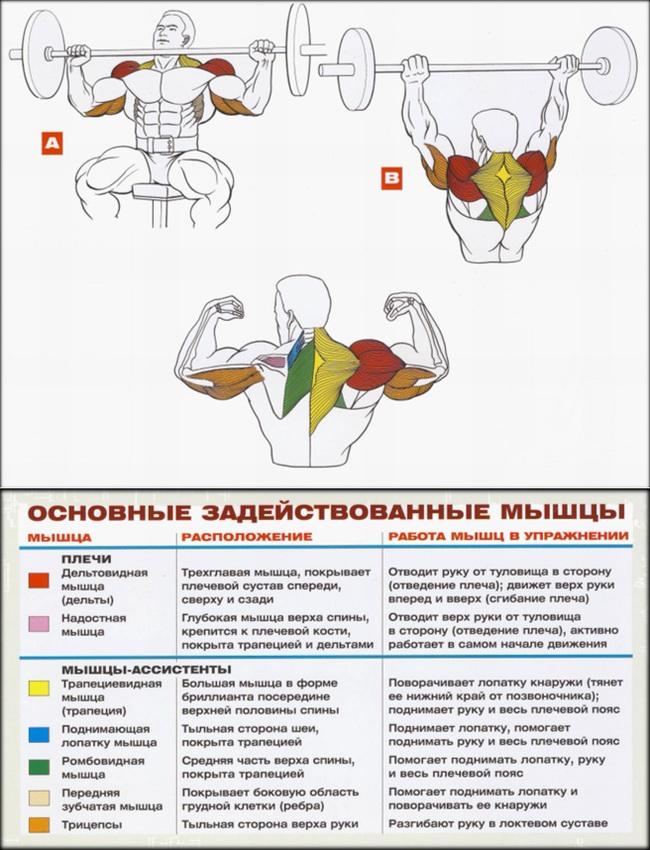 Дельтовидные мышцы Каталог