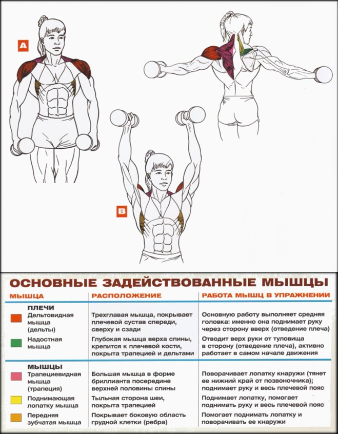 Развитие плечевого пояса в домашних условиях