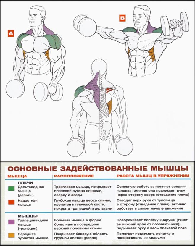В чем принцип методик увеличения груди