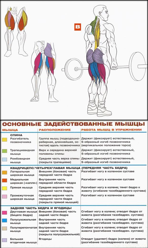 Как накачать мышцы спины позвоночника 100