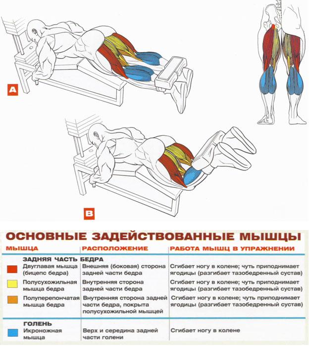 Как накачать мышцы на бедрах в домашних условиях