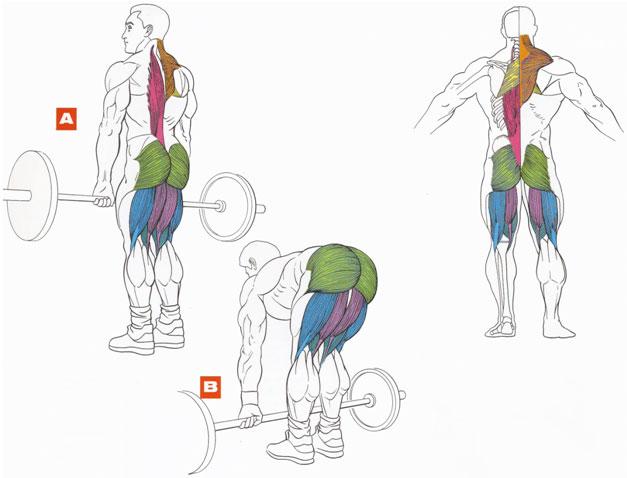 Можно ли делать становую тягу при остеохондрозе